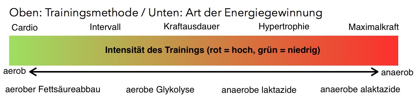 Satzpausen beim Krafttraining und Energiebereitstellung